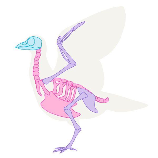 600x600 Howtodrawbird Skeleton Draw Paint In Animal