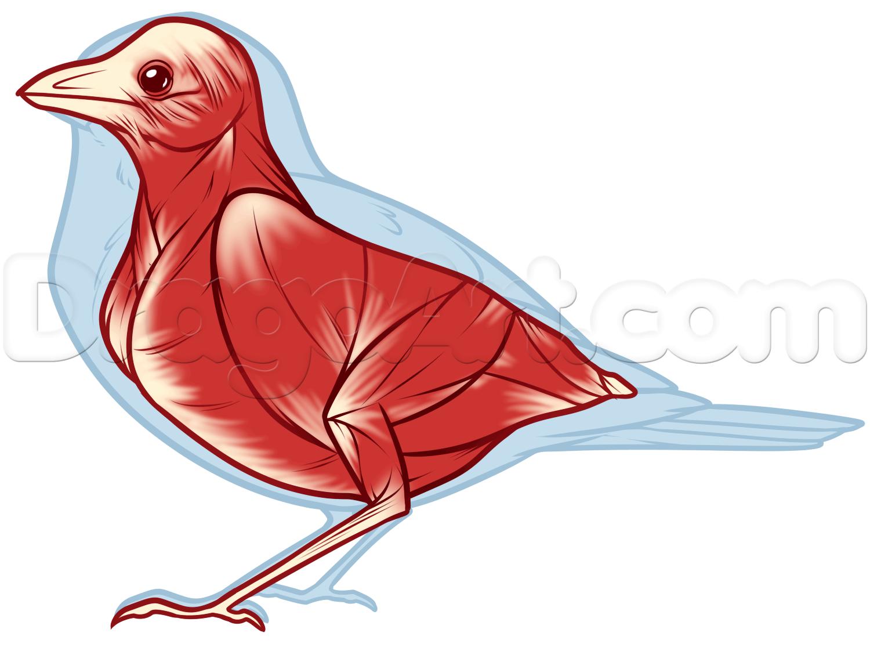 1500x1122 Bird Anatomy Drawing, Step