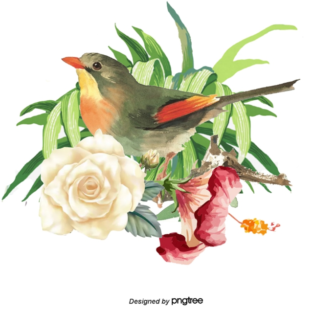 640x640 hand painted parrot vector, hand painted flowers, drawing animals