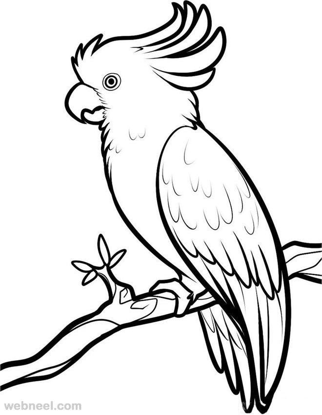 660x849 How To Draw A Bird Step