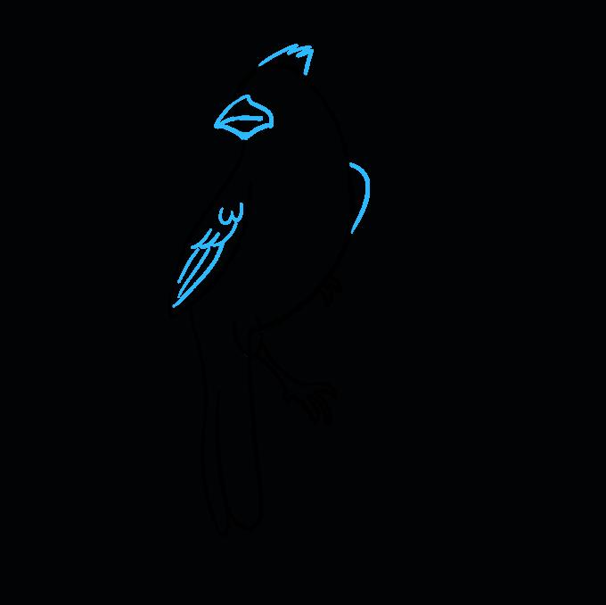 680x678 How To Draw A Cardinal Bird