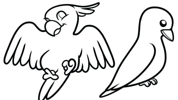 570x320 How To Draw Easy Birds Step