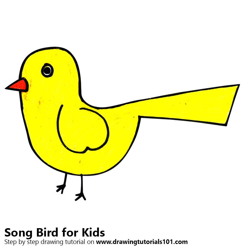 800x800 Learn How To Draw A Song Bird For Kids