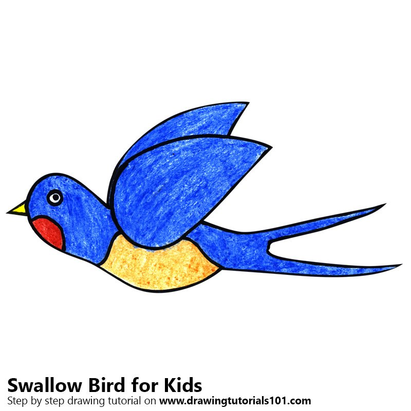800x800 Learn How To Draw A Swallow Bird For Kids