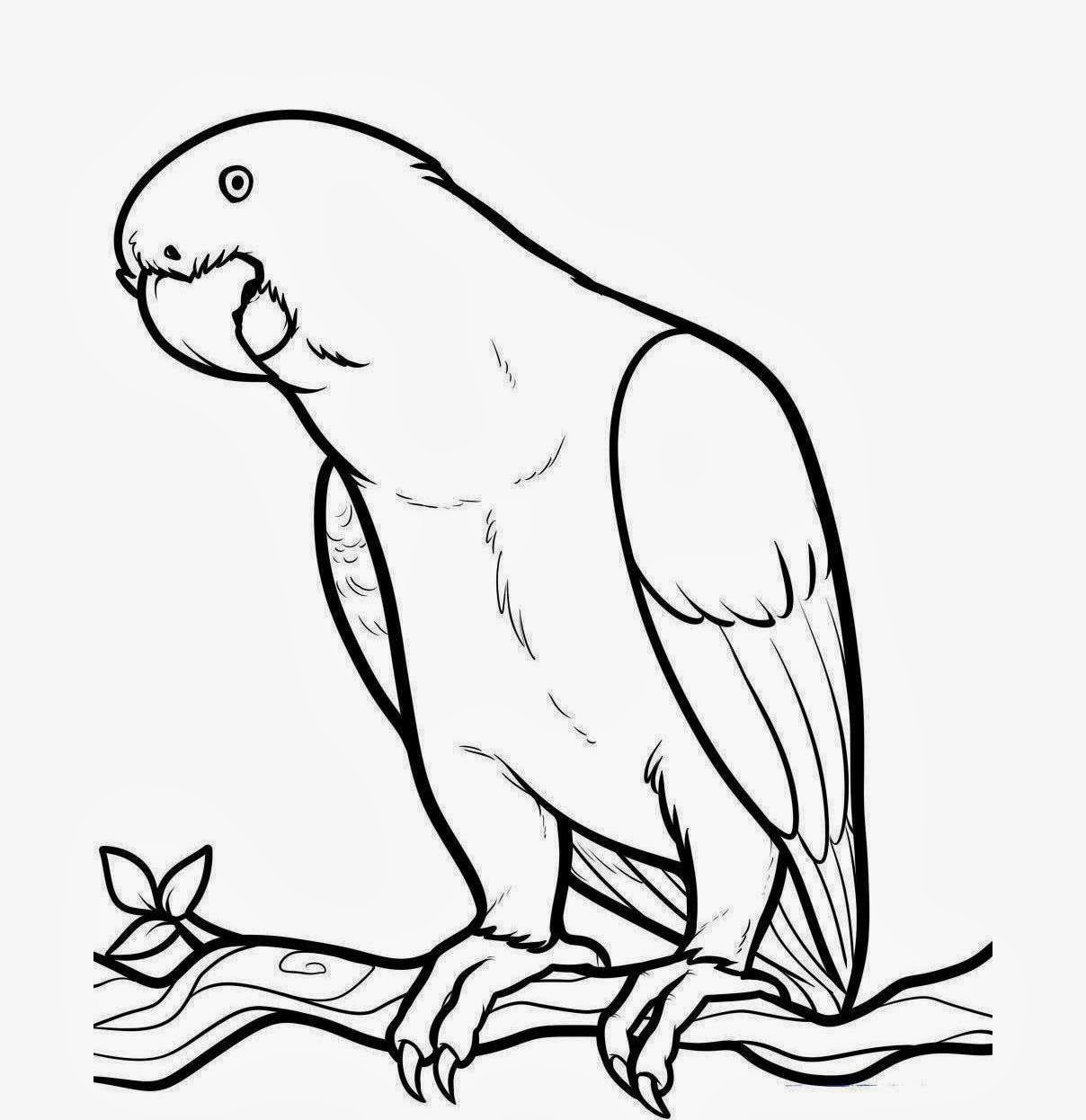 1208x1246 Outline Drawings For Kids Parrot Bird Drawing At Getdrawings Free