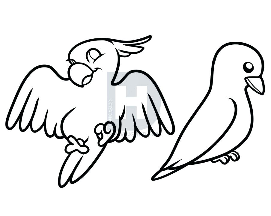 904x720 Bird Drawing Kids