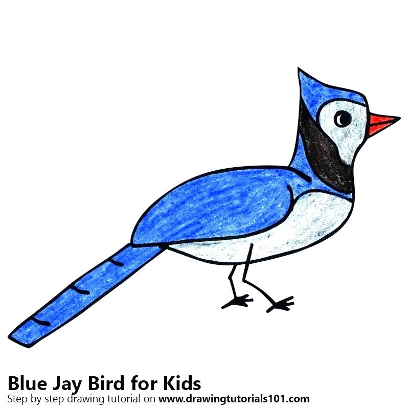 800x800 Bird For Kids How To Drawing Angry Bird For Kids Bird Kids