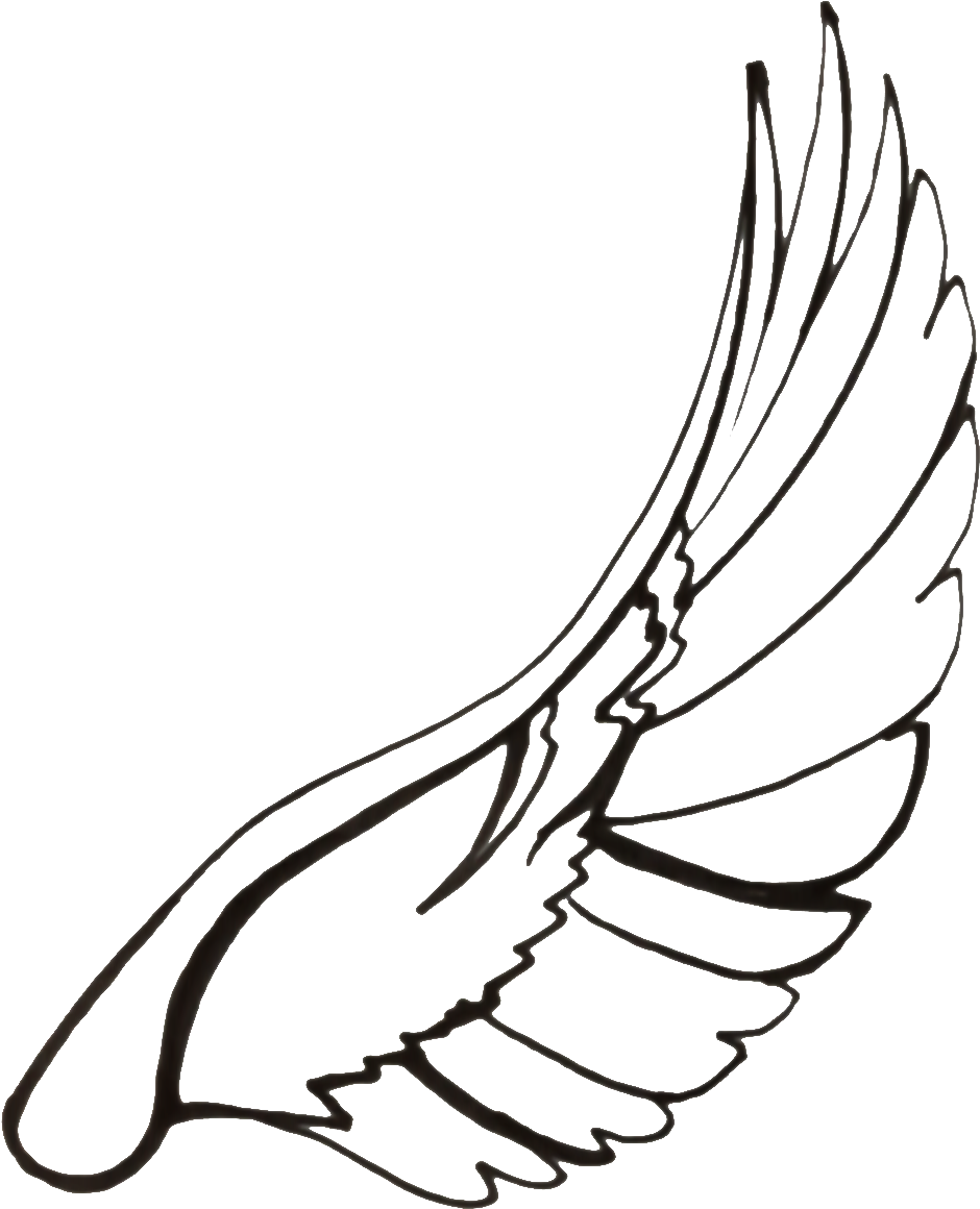 940x1160 Hd Drawing Feather Dove Transparent Png Clipart Free