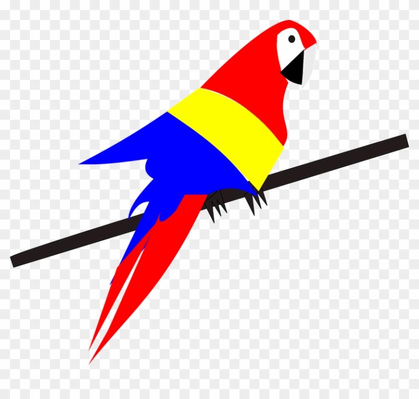 840x800 Parrot Bird Exotic Tropical