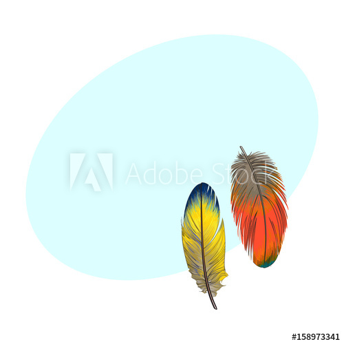 500x500 Two Hand Drawn Smoth Orange And Yellow Tropical, Exotic Bird