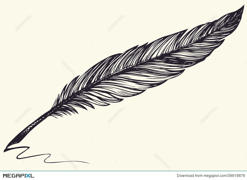800x586 Vector Freehand Drawing Of Dark Bird Feather Illustration