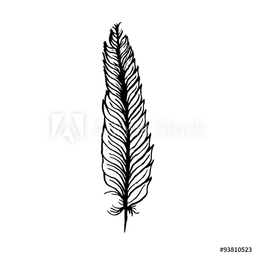 500x500 Hand Draw Bird Feather Style Sketch For Registration Cards