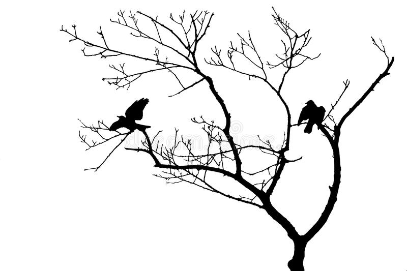 800x533 bird in tree silhouette birds tree silhouette isolated bare white