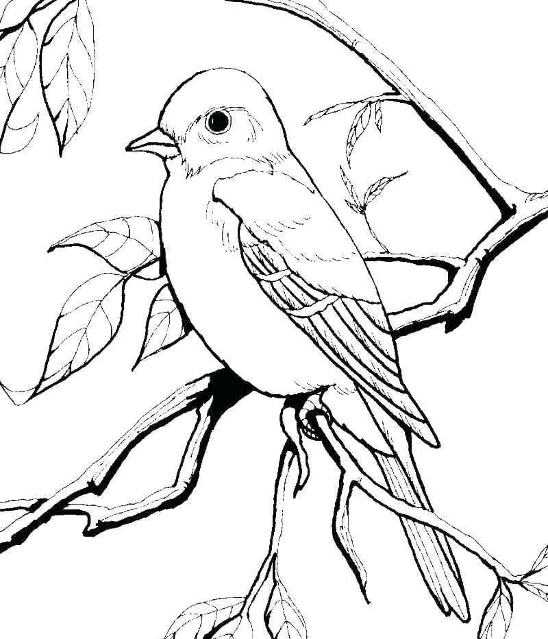 800x932 Printable Bird Nest Coloring Pages Birds Angry