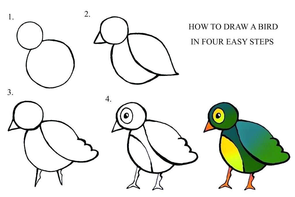 1024x684 Steps To Draw A Bird Biological Drawings Bird Gliding Flight Birds