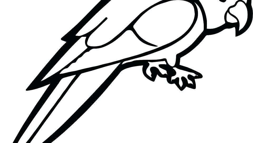 960x544 Bird Nest Coloring