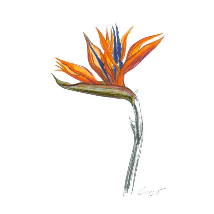 700x700 Bird Of Paradise Botanical Flower Duvet Cover