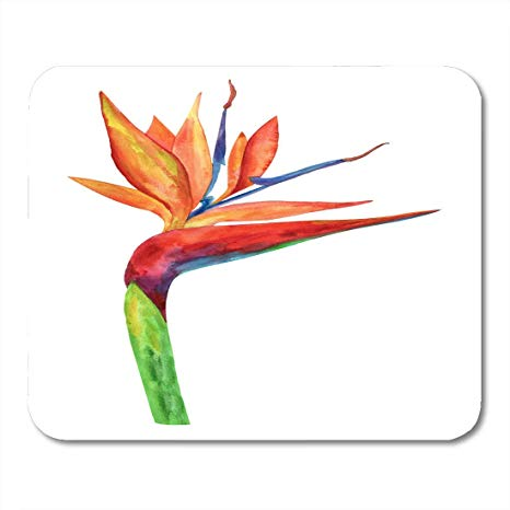466x466 Vankine Mouse Pads Colorful Drawing Flower Bird