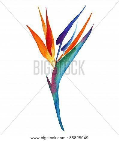 397x470 Image Result For Bird Of Paradise Flower Drawing Inspire Pattern