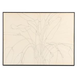 300x300 Ann Bruce Stoddard Ink Drawing Bird Of Paradise Ii