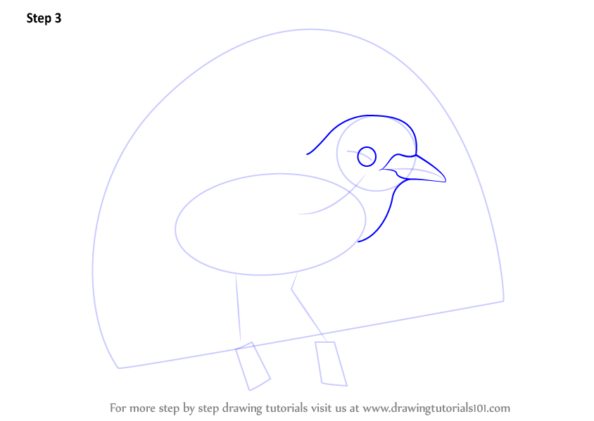 844x598 Learn How To Draw A Superb Bird Of Paradise