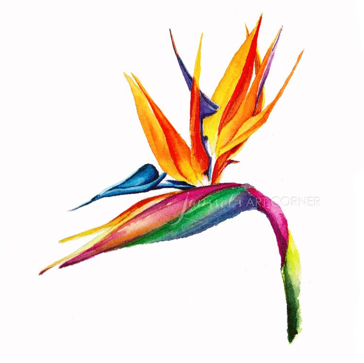 750x749 Tropical Plant Bird Of Paradise In Watercolor Janssel's Art