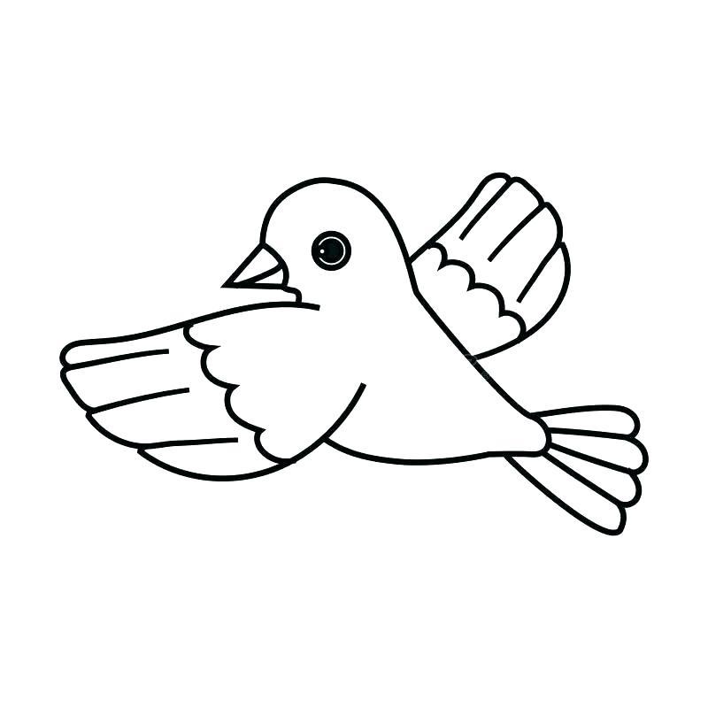 800x800 bird outlines bird drawing sketching vector flying bird outline