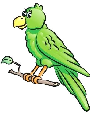 400x493 drawing a parrot parrot cartoon drawing parrot simple