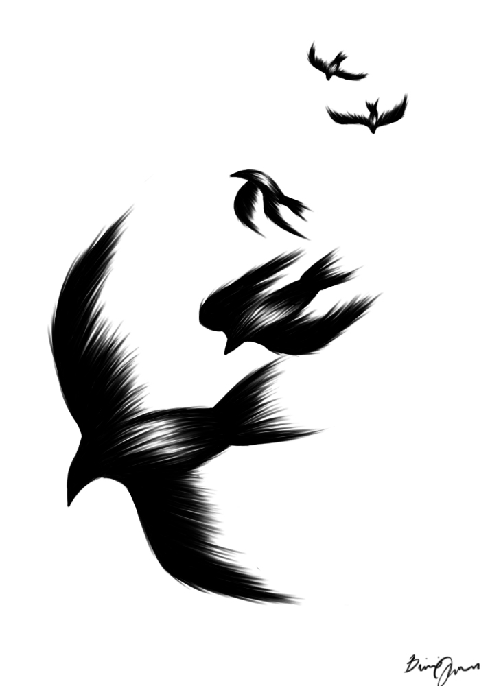Black And White Bird Drawings Free Download Best Black And