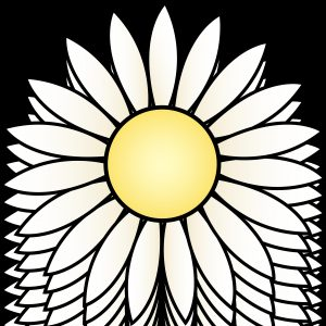 300x300 Daisy Drawing Refrence Black And White Daisy Drawing