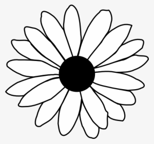 300x281 White Daisy Png, Transparent White Daisy Png Image Free Download