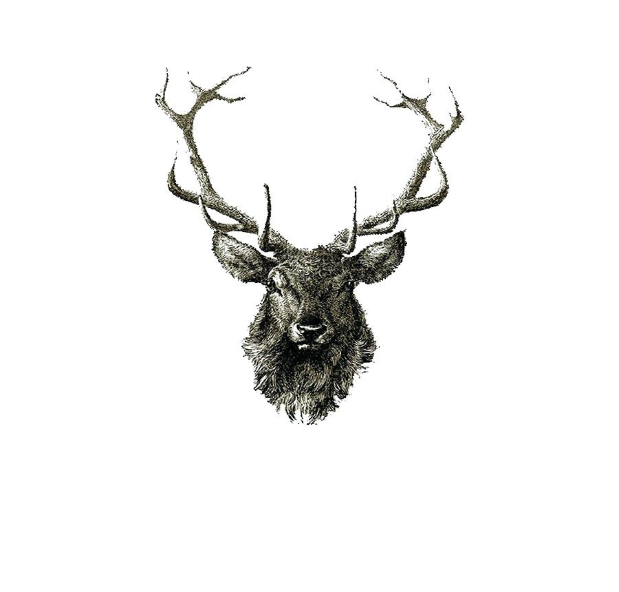 900x860 deer drawing deer realistic drawing deer head drawing tattoo