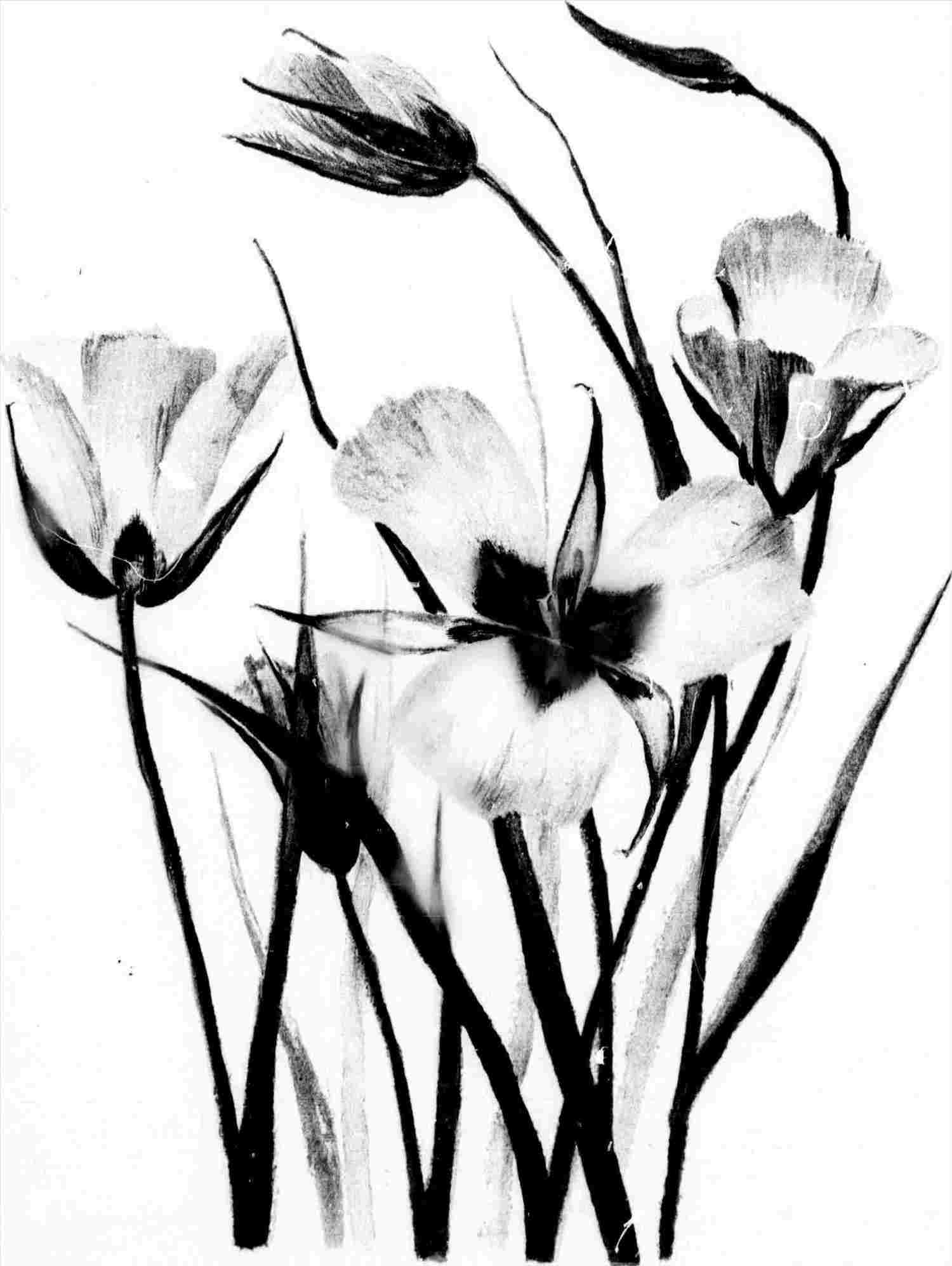 1500x1992 Easy Nature Drawings Black And White