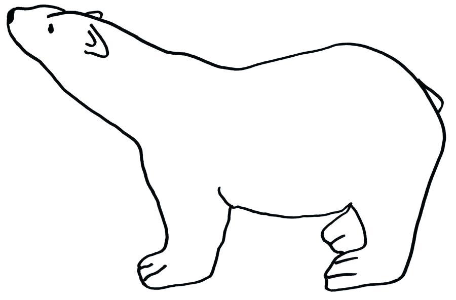 900x592 polar bear outline easy bear drawing outline drawing teddy bear