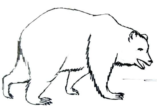 550x392 bear draw how to draw a bear black bear simple drawing