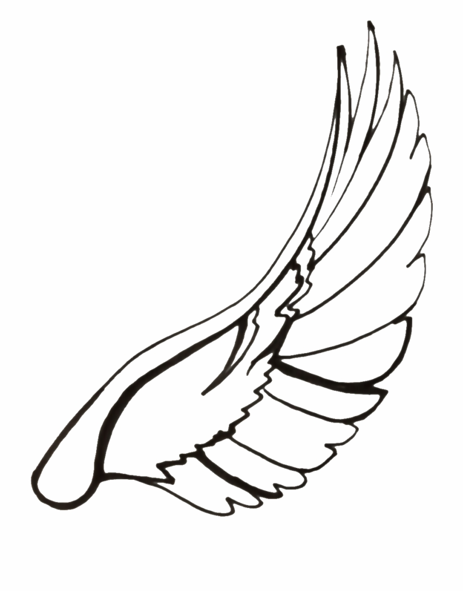 920x1175 Drawing Feather Dove Transparent Png Clipart Free
