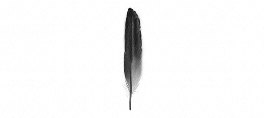 850x381 How To Draw Feathers
