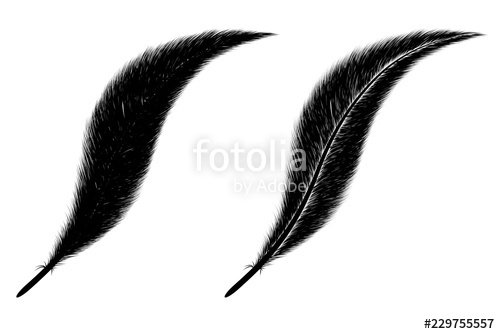 500x334 Set Of Feather On White Background Beautiful Black Feather