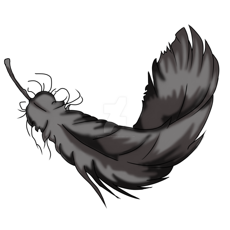 894x894 Twin Drawing Feather Transparent Png Clipart Free Download
