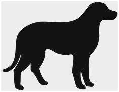 236x183 yellow lab coloring pages awesome easy black lab drawing