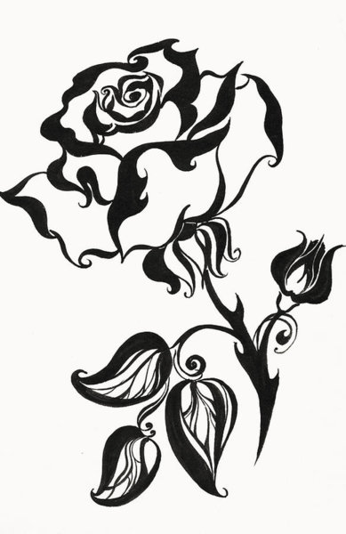 389x600 Black Roses Drawings Fine Art America