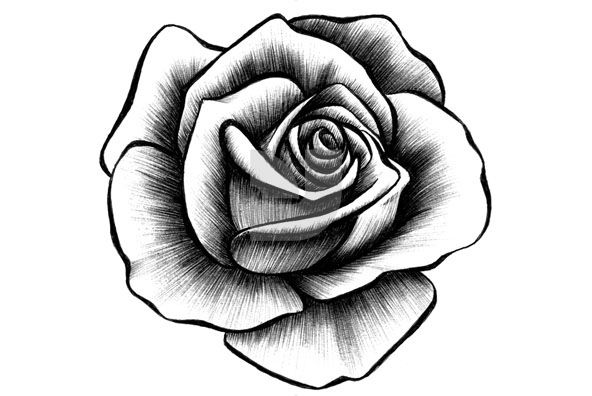 592x396 Hand Drawn Rose Collection Tattoos