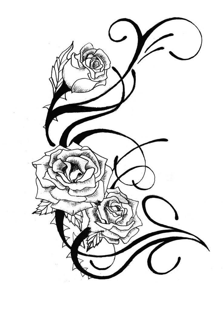 736x1044 Line Drawing Rose