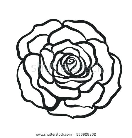 450x470 Rose Drawn Picture Of Step Dead Rose Drawing Simple