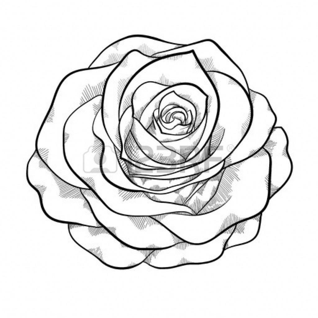 1024x1024 Black And White Sketches Of Roses Black And White Sketches