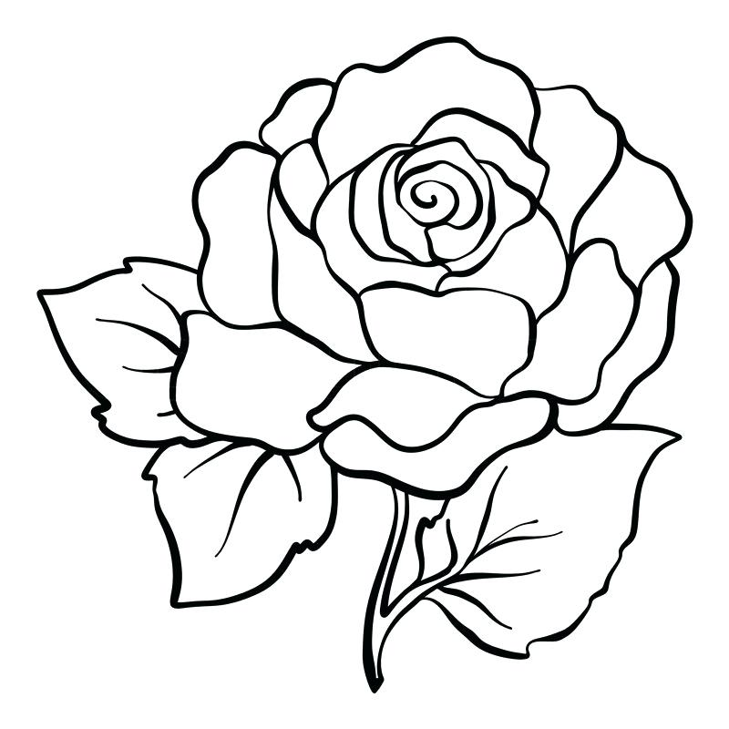 800x800 Rose Line Drawing Clip Art Zupa