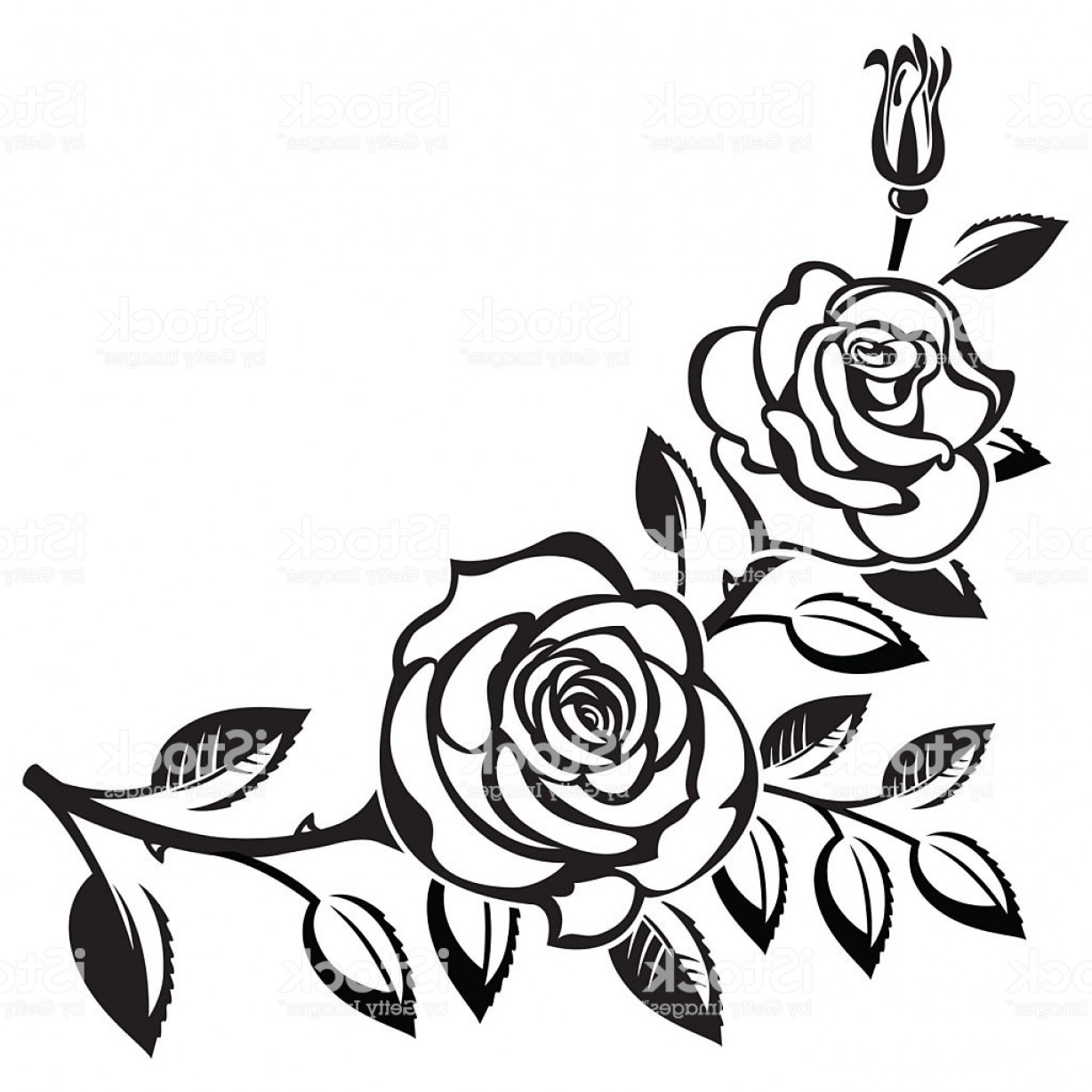 1228x1228 Black Branch Of Roses Drawing On White Background Gm Soidergi