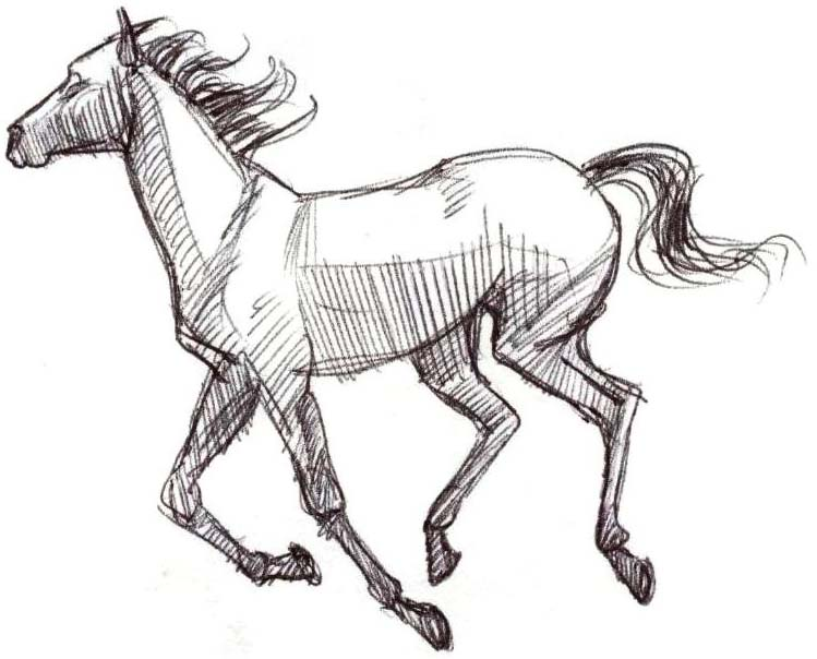 749x604 stallion drawing black stallion for free download