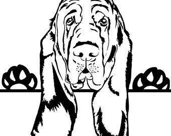 340x270 Bloodhound Clipart Etsy