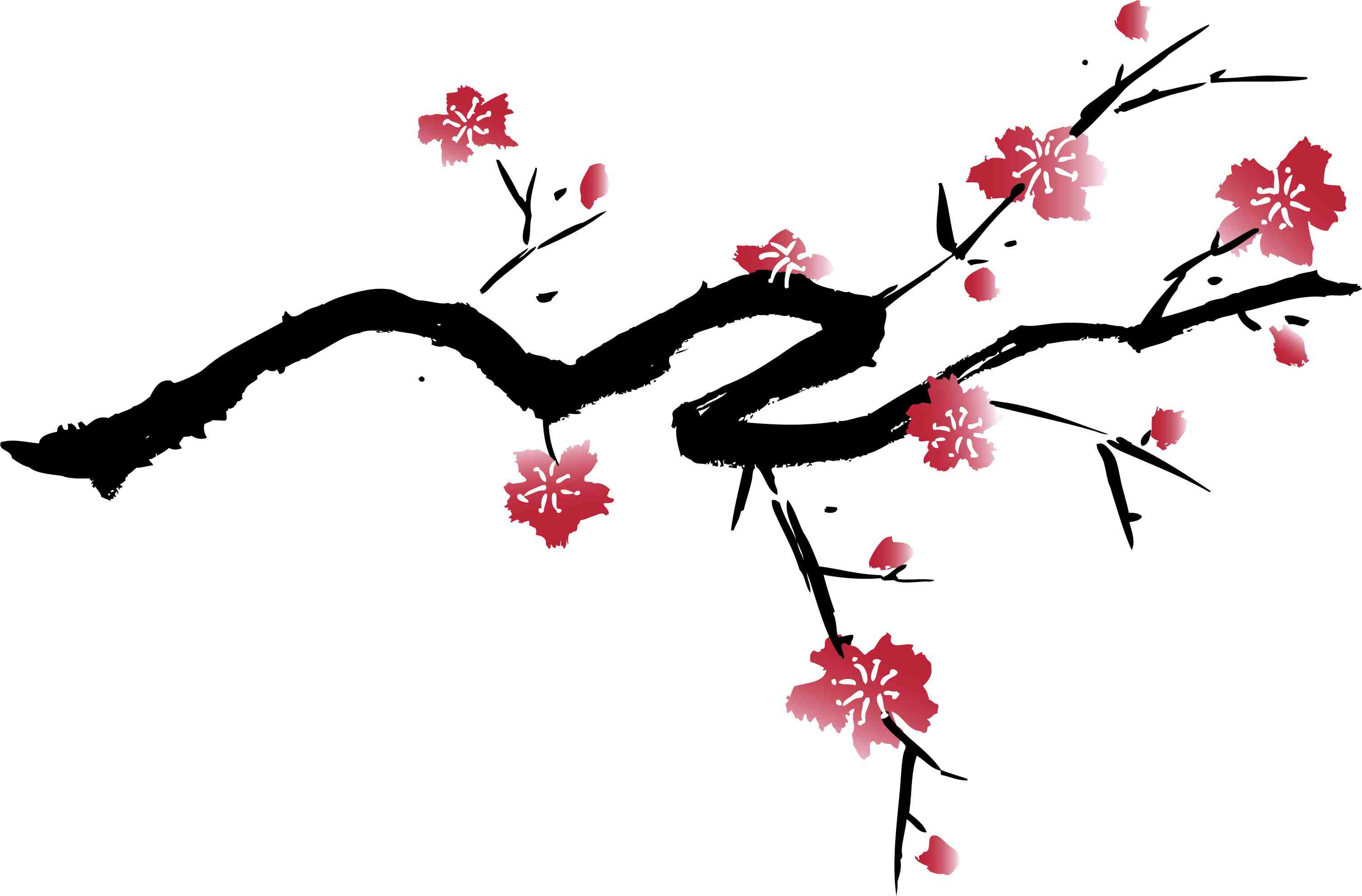 3017x1985 Cherry Blossom Drawings Clip Art